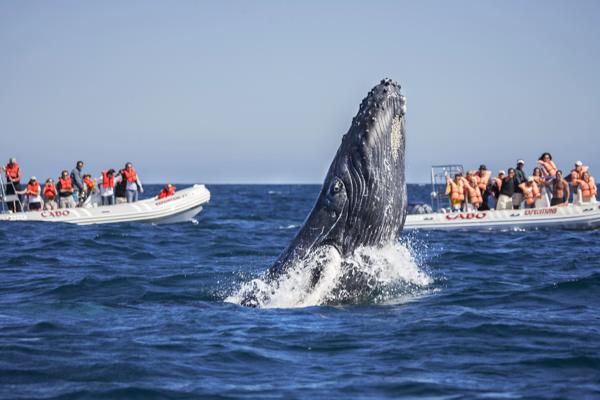 AA_FITURCA-whale(1)