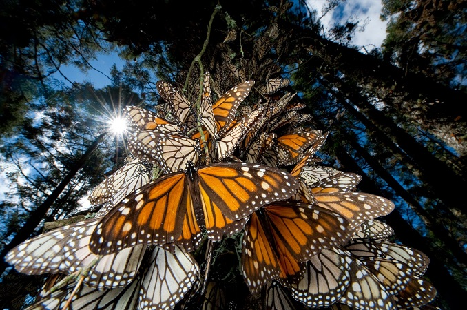 MONARCHS-BY-NATIONAL-GEOGRAPHIC-copia